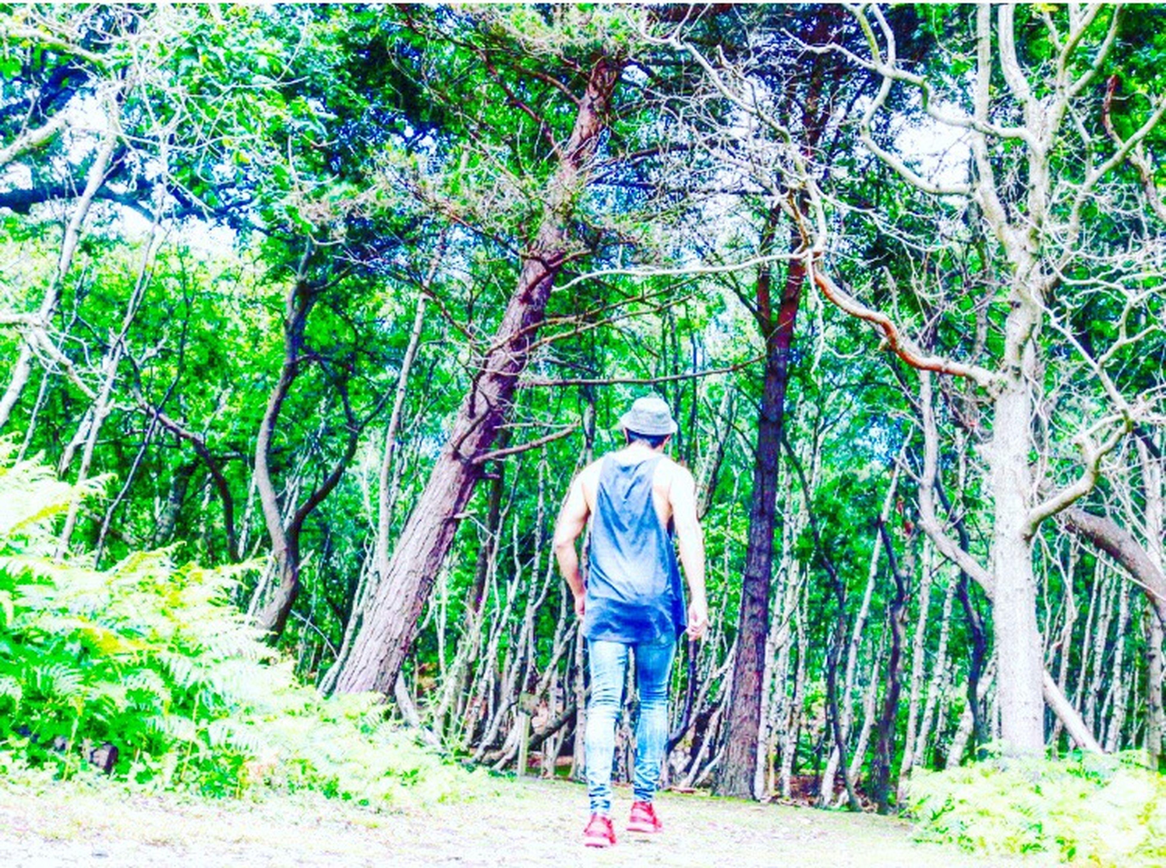 forest, tree, full length, woodland, lifestyles, tranquil scene, non-urban scene, rear view, leisure activity, tree trunk, nature, tranquility, scenics, walking, beauty in nature, tourism, tourist, casual clothing, day, growth, vacations, branch, green color, outdoors, woods, solitude