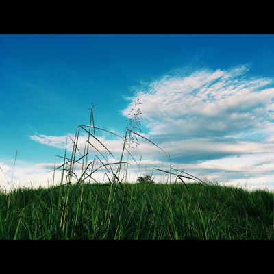 Beauty In Nature Blue Cloud - Sky Day Field Grass Growth Nature No People Outdoors Plant Rural Scene Scenics Sky Tranquil Scene Tranquility Tree