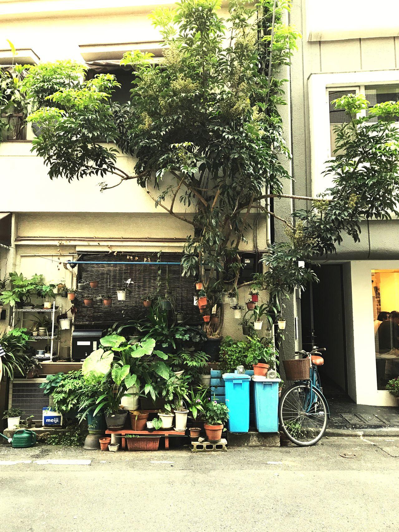Monster tree Growth Plant City Japan Photography Tokyo Dawndotcom