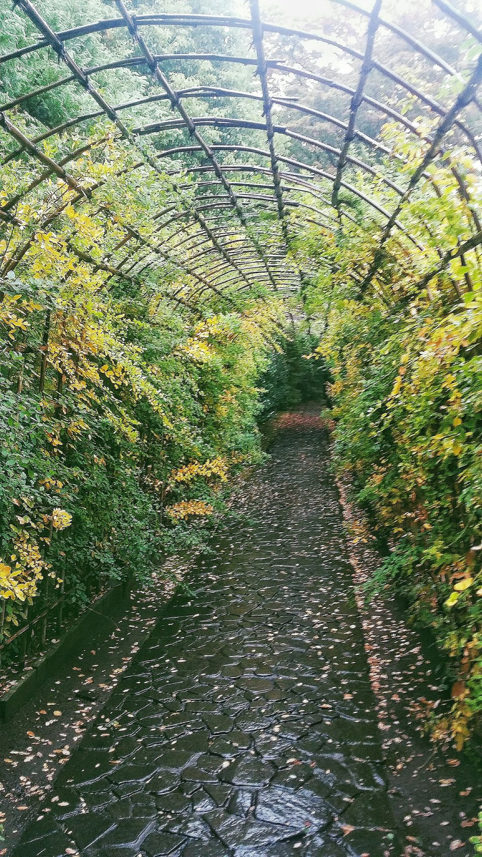 At one end of the Hagi Tunnel is a canopy, one which would be covered in wisteria in summer. Fall 秋 Autumn Autumn 2015 Tokyo Autumn 2015 Changing Seasons Tonogayato Teien Hagi Tunnel Nature Naturelover EyeEm NatureLover Naturecollection Naturephotography Urban Nature Tokyo Nature 1913 Eguchi Teijo 1929 Iwasaki Yataro Rain Tokyo Japan Travel Photography