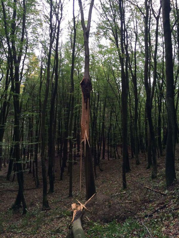 Thunderstruck Tree