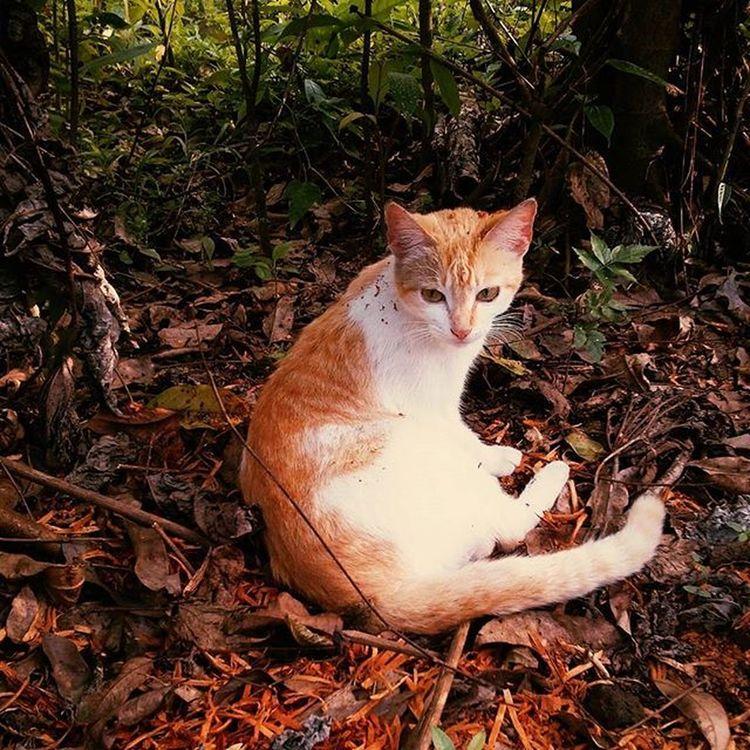Frida Cat Gato Relax Felinos Misteriosa Solitario Mycat Wildlife