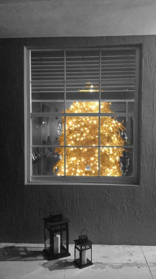 Christmas spirit in January Chritmastree Plants Trees Christmas Lights Windows Through The Window Candles Colorsplash Eyeem Popular Photos Eye4photography