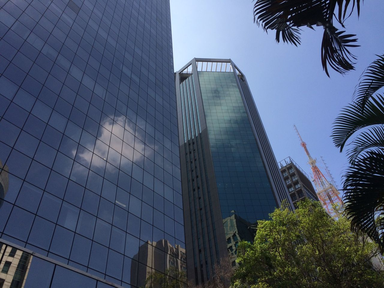 modern, skyscraper, architecture, reflection, building exterior, tree, growth, city, built structure, no people, business, outdoors, corporate business, palm tree, sky, day
