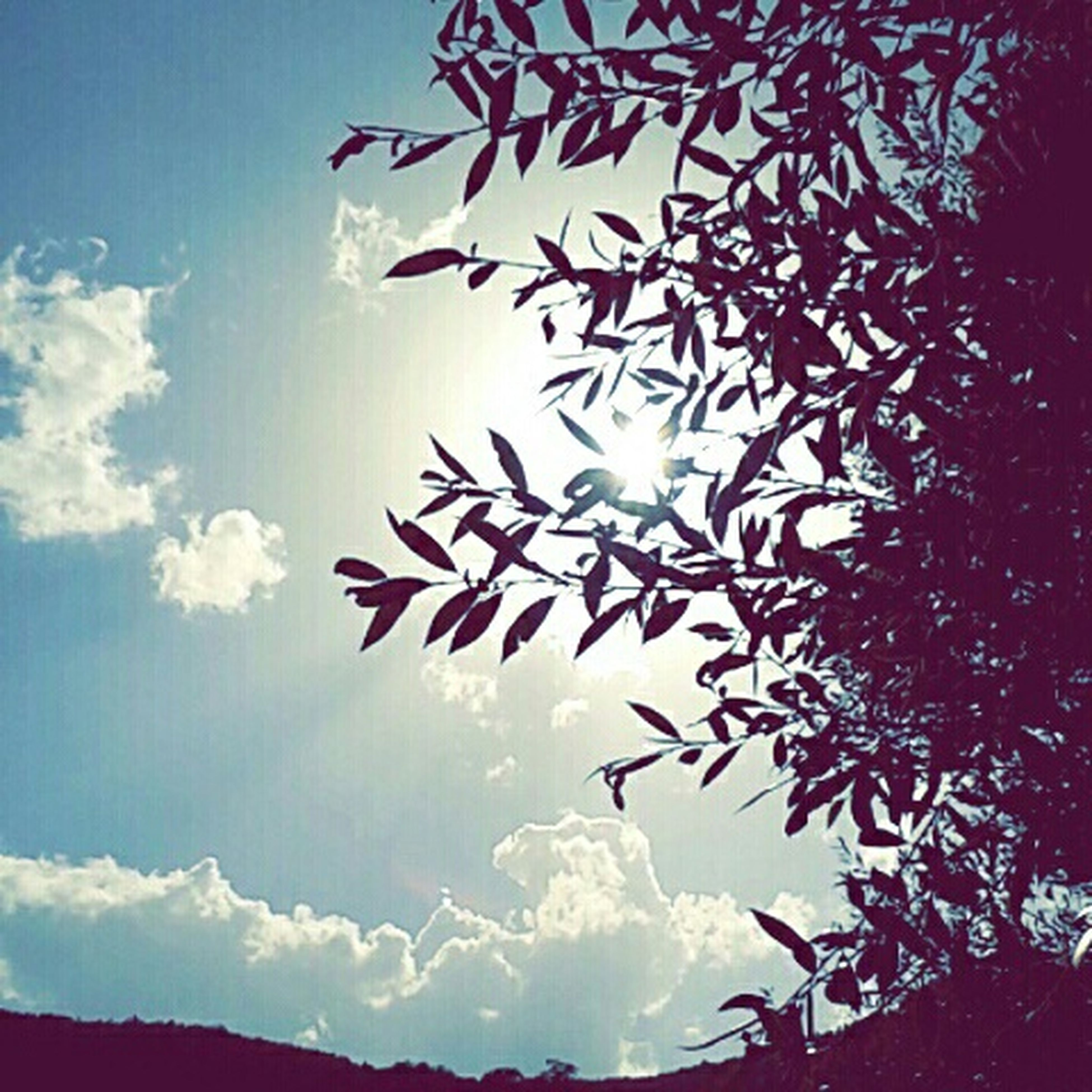 low angle view, sky, tree, cloud - sky, beauty in nature, nature, sun, tranquility, silhouette, blue, sunlight, scenics, cloud, sunbeam, outdoors, no people, tranquil scene, flying, day, high section