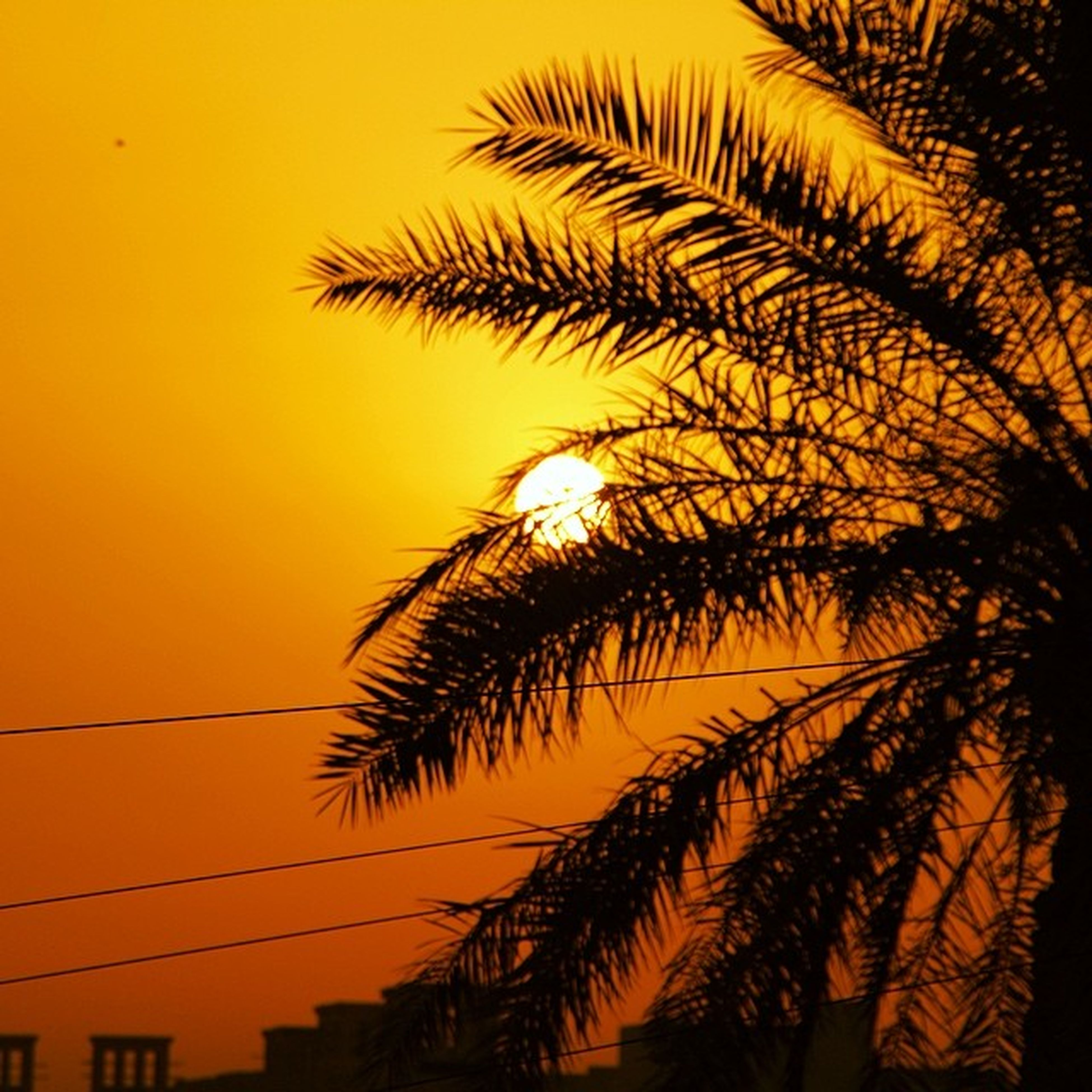 sunset, palm tree, silhouette, orange color, low angle view, growth, beauty in nature, nature, tree, sky, tranquility, scenics, palm leaf, clear sky, outdoors, no people, sun, tranquil scene, dusk, idyllic