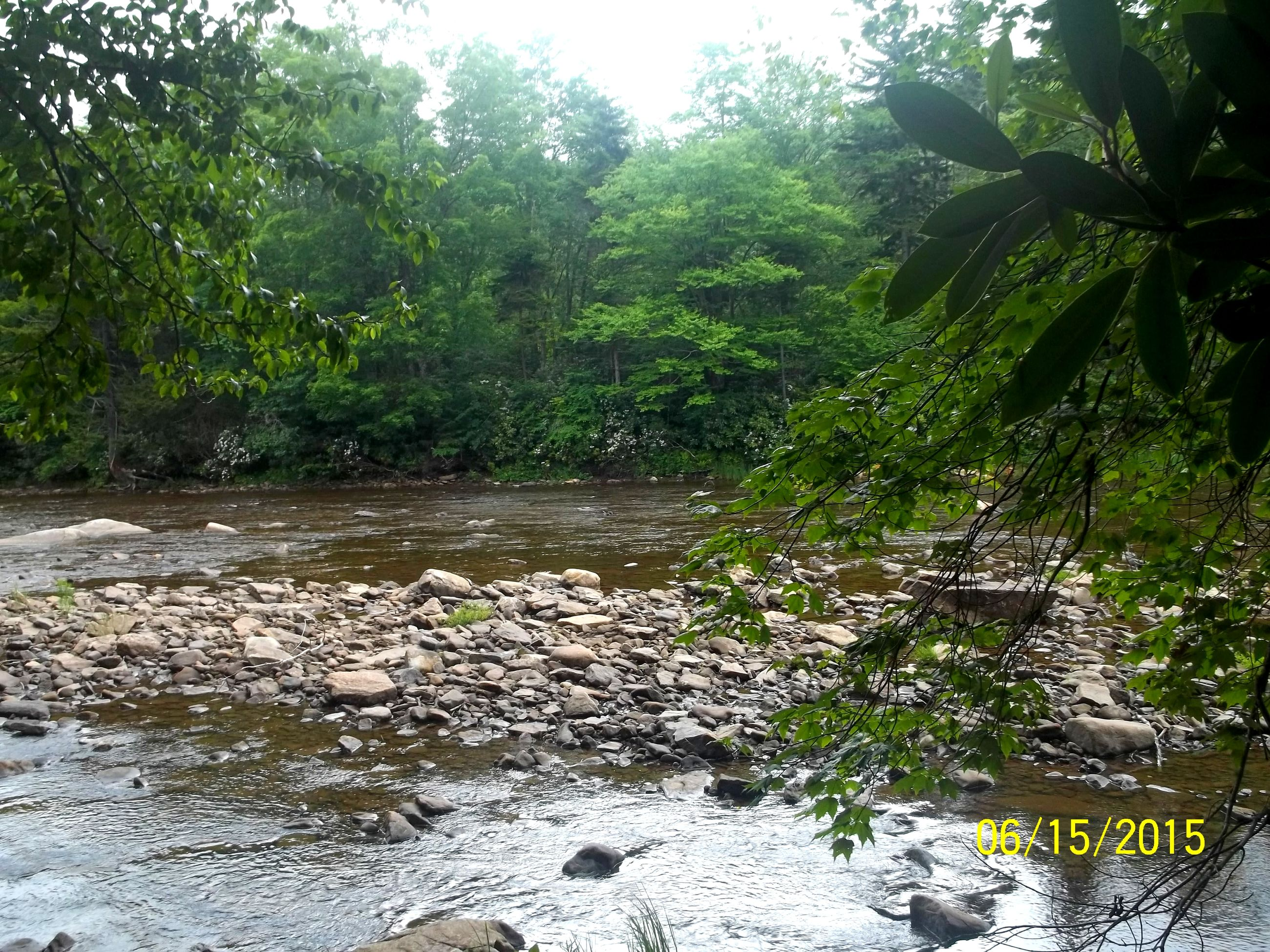 water, day, nature, growth, plant, no people, tree, rock - object, outdoors, tranquility, beauty in nature, animal themes
