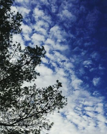 Sky Nature Tree Winter Morocco No People Beauty In Nature EyeEm Nature Lover Bluesky Cloudy Sky Cotoncandy