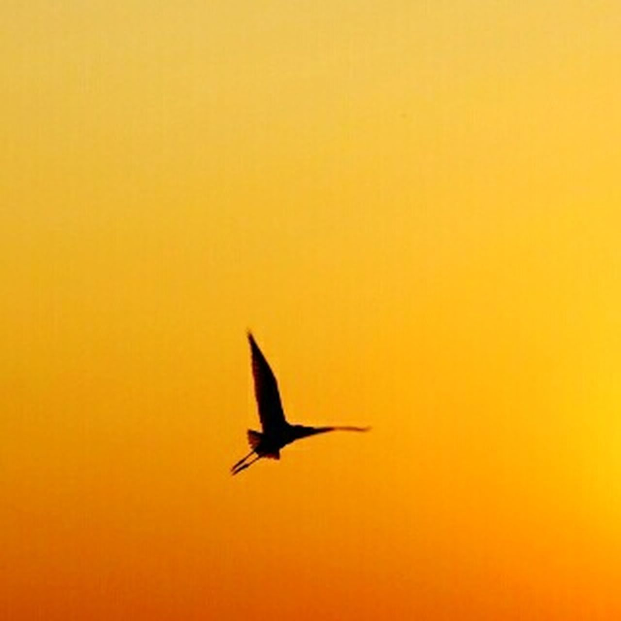 bird, animals in the wild, flying, animal wildlife, one animal, sunset, silhouette, animal themes, no people, nature, outdoors, yellow, spread wings, beauty in nature, day, sky, bird of prey