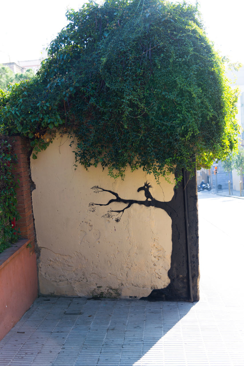 tree, plant, growth, outdoors, no people, day, architecture, nature