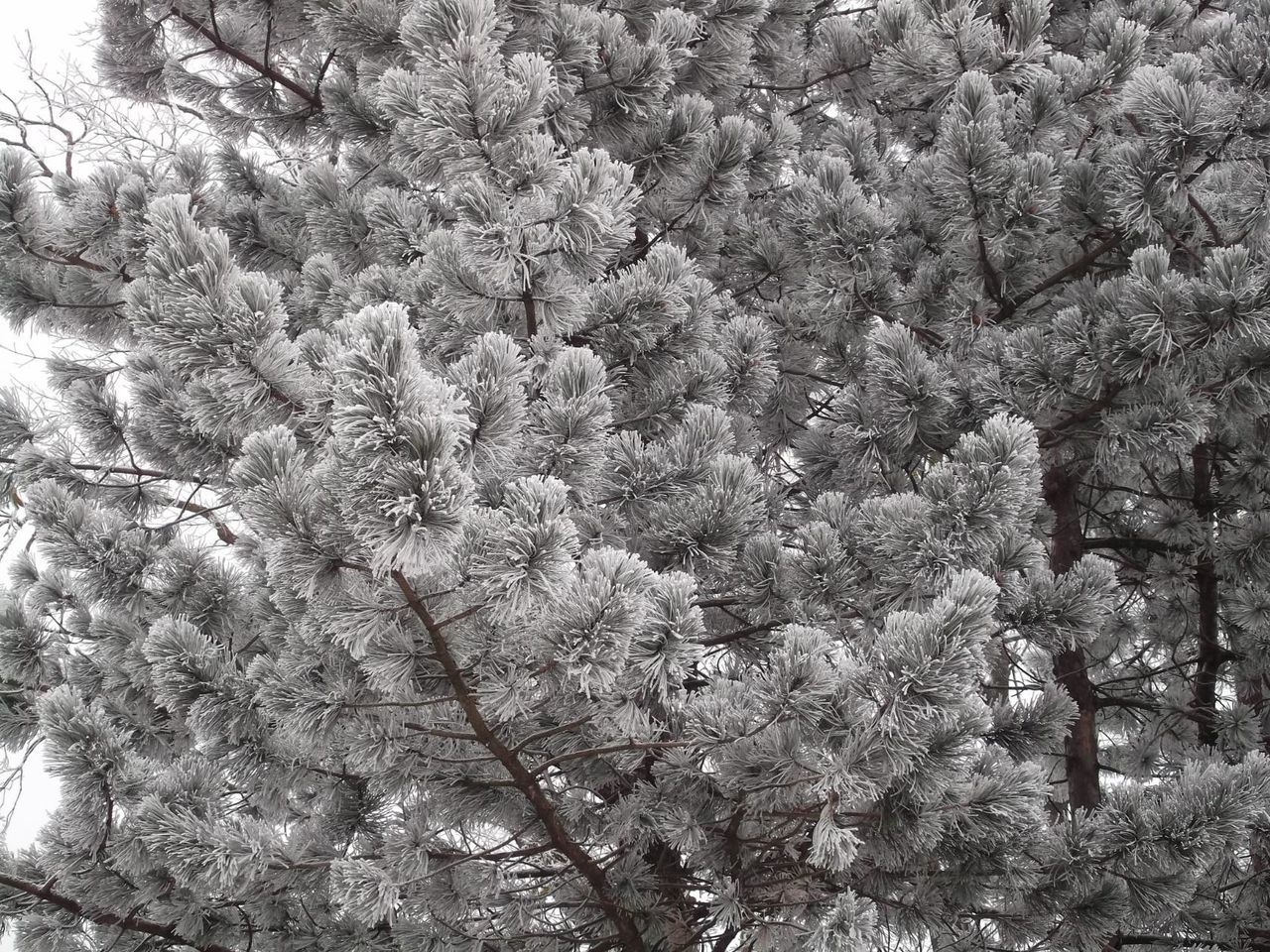 Winter Trees White Frost No People Winter Fairytale ❄⛄❄