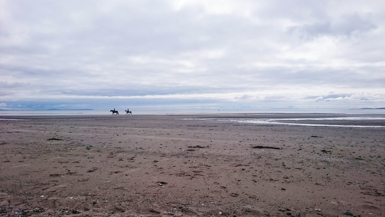 Horse Riding Horses On The Beach Horses Walking Horse On Beach Beach Beach Life Beach Photography Beachphotography Beachlife Beach Walk Beaches Beach View BEACH!  Scottish Beaches Scottish Beach Scotland Sands Of Luce Luce Bay Sandhead Sandhead Beach