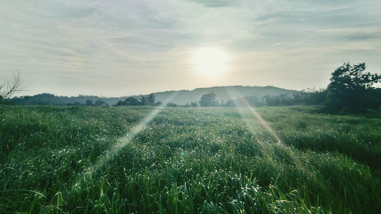 growth, agriculture, field, nature, sunbeam, landscape, rural scene, farm, tranquility, beauty in nature, tranquil scene, no people, crop, sun, scenics, plant, outdoors, sunlight, day, tree, sky, irrigation equipment, grass, freshness