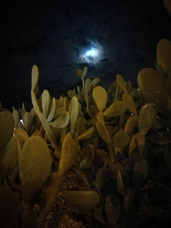 No People Nature Cactus Moon Moon And Clouds Moon Light TerraMia!♥