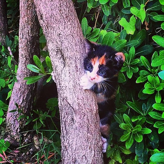 Kitty Kitten Hiding Tree Hugging A Tree Tree Trunk Treehugger Cat Catsofinstagram Cats Kittens Kittycat Kittenoftheday Cute Cutepets Animals Whatareyoudoing Hide And Seek Whereareyou Hiding From The World Lonely Gettyimages Kitty Cat Animal_collection Everything In Its Place