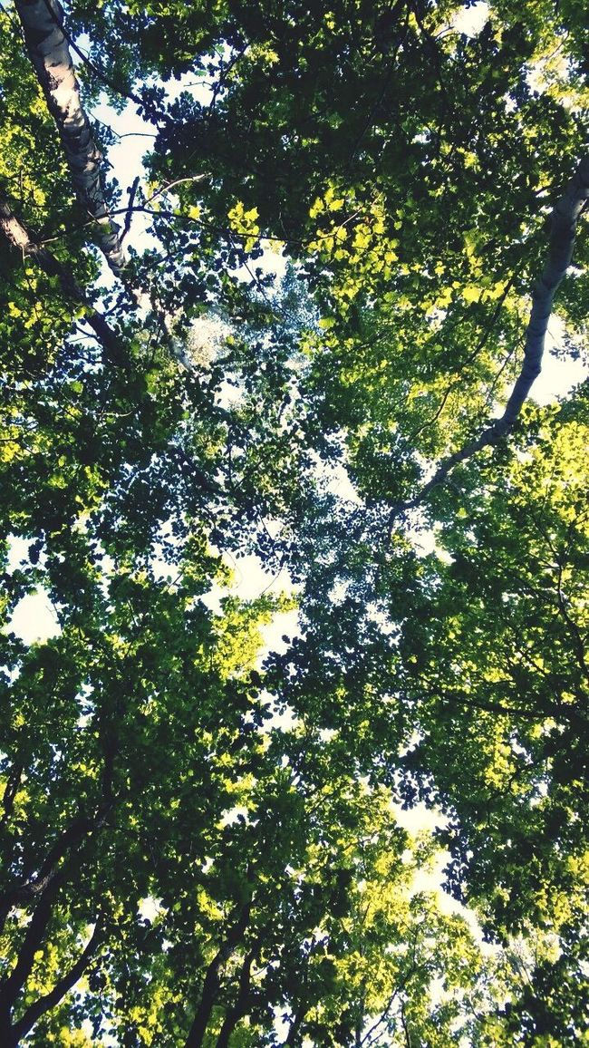 Look Up And Thrive First Eyeem Photo Eye For Photography Eye Em Nature Lover