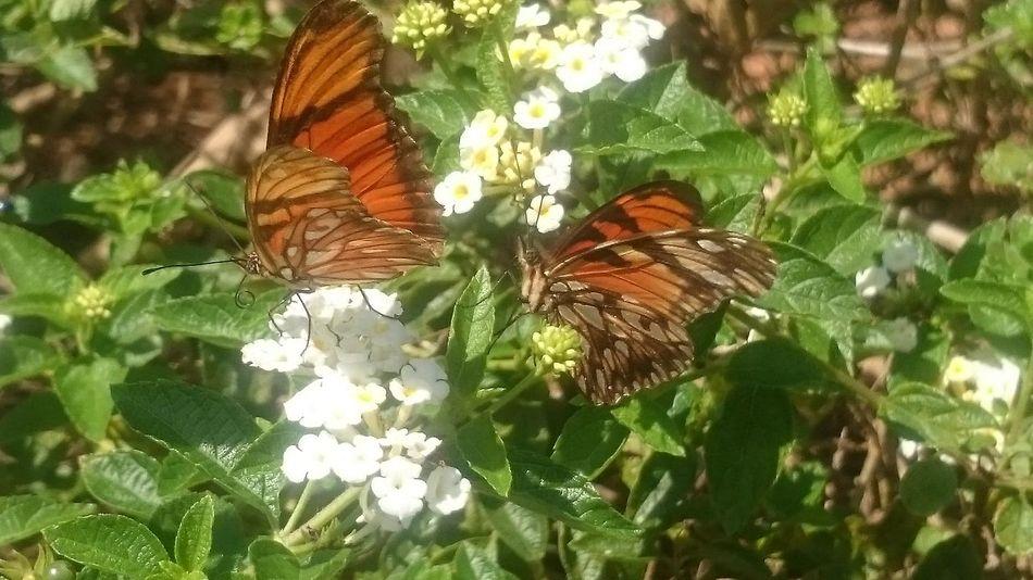 Semfiltro XperiaZ1 Campinas, São Paulo, Brasil Natureza 🐦🌳 Buterfly Parquedasaguas