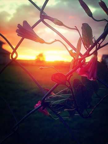 Perfect day to take photos! :> Taking Photos EyeEm Nature Lover Relaxing Sunset Silhouettes Depth Of Field