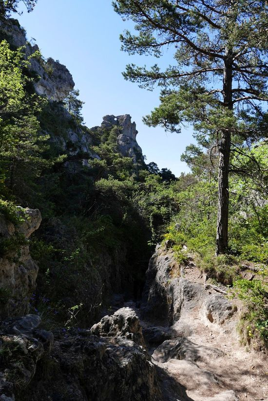 Tree Nature Outdoors No People Beauty In Nature Forest Chao Montpellier Le Vieux Tourism Rock Formation Rock - Object Nature Photography Naturelovers Natural Beauty Aveyron Nature_collection Occitanie Beauty In Nature Springtime Travel Destinations Nature Landscape Tree Pine Tree Mountain