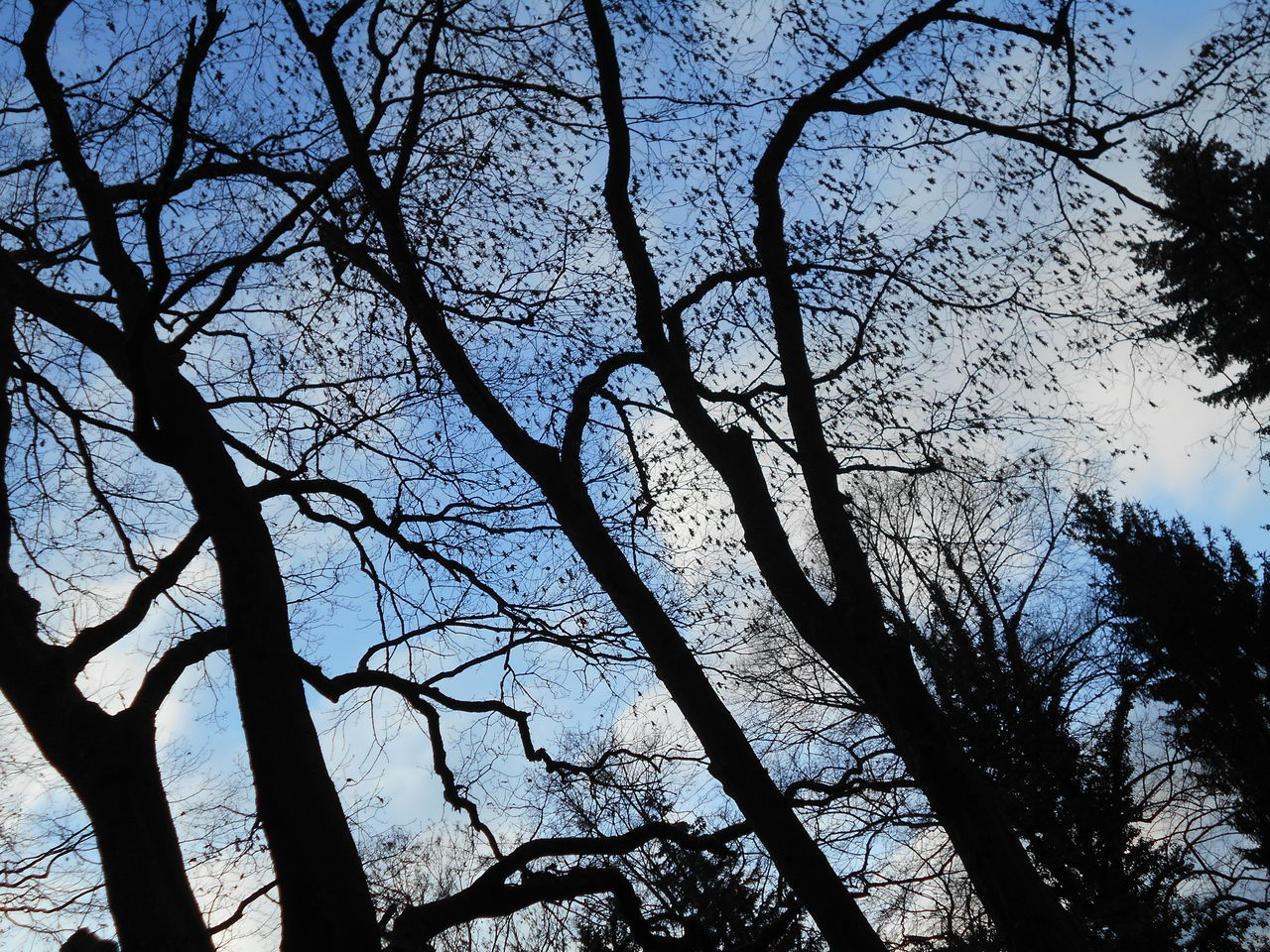tree, branch, nature, bare tree, beauty in nature, no people, low angle view, tranquility, outdoors, silhouette, day, sky, scenics, clear sky