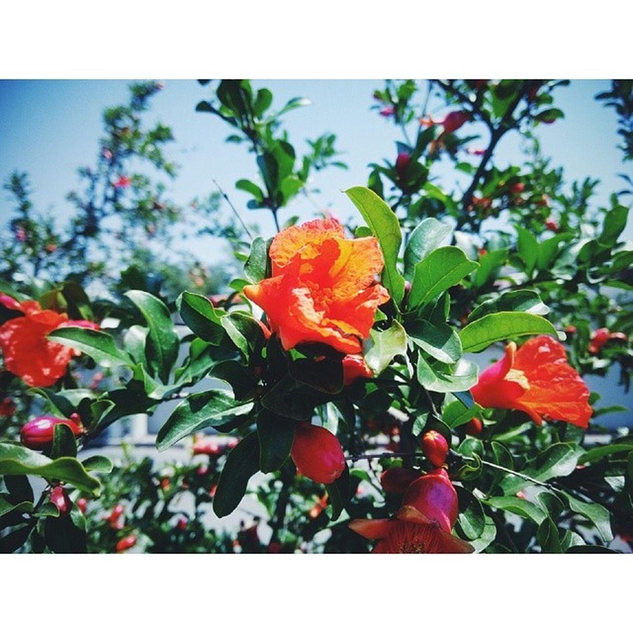 花朵 Flowers 天津