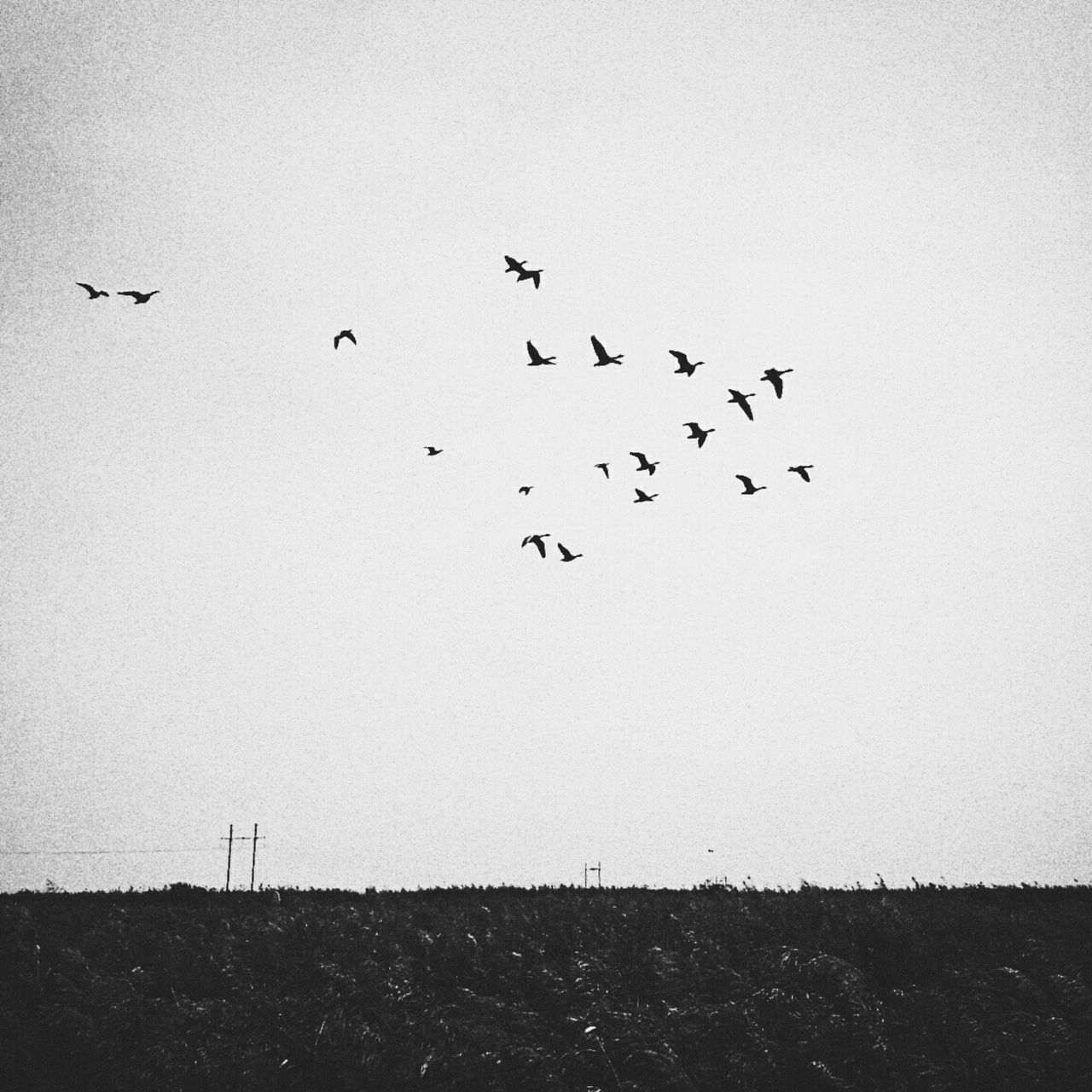 Showcase: December The Moment - 2015 EyeEm Awards EyeEm Gallery Enjoying Life Getting Fresh Go Back To Home EyeEm Birds Fly To The Sky Winter Is Coming Friends Mandy Nature_collection Blackandwhite Photography Phone Photography