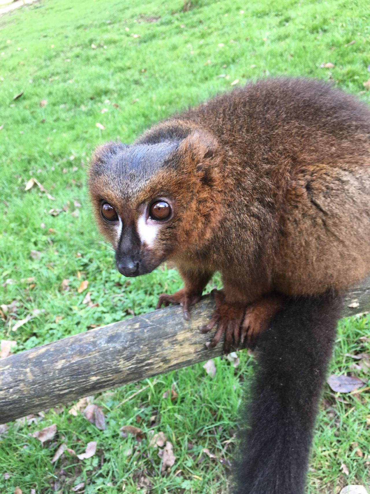 Beauty In Nature Animal Themes One Animal Animal Wildlife Grass Red Panda Zoo Tree