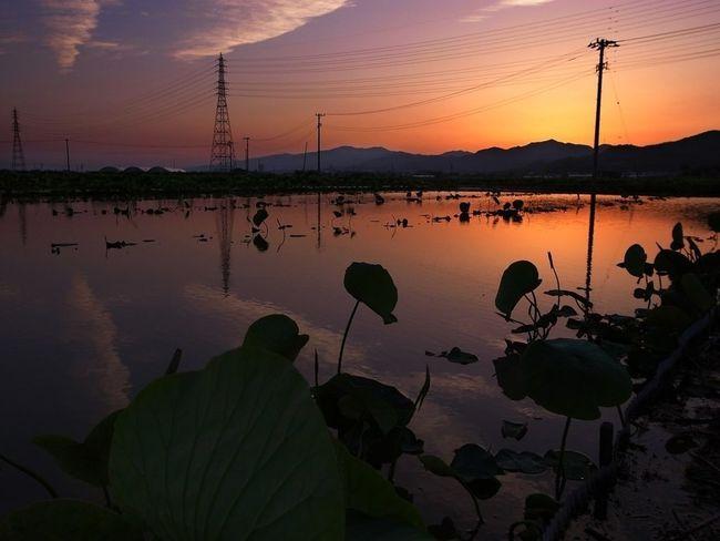 Sunset 徳島県