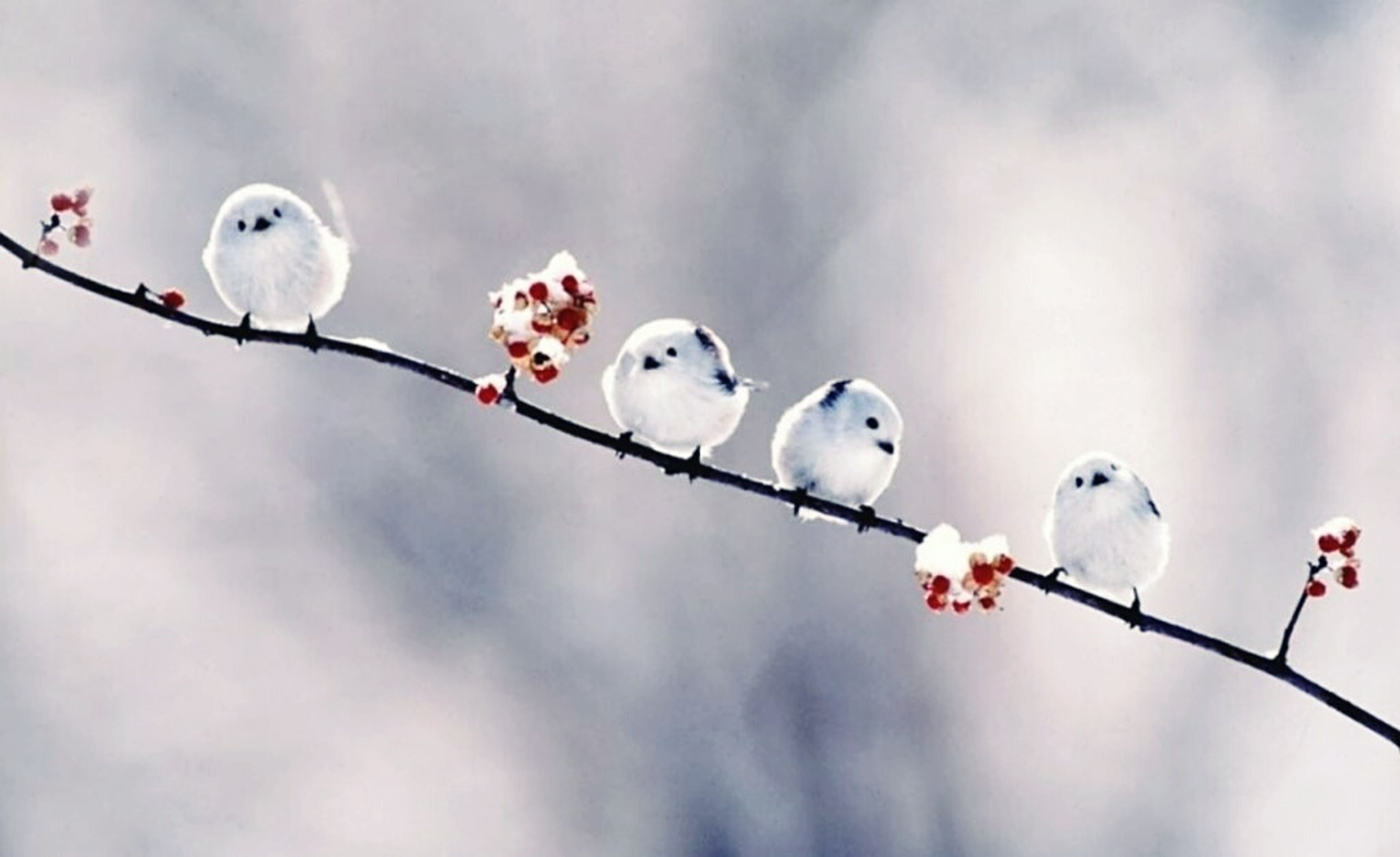 bird, animal themes, low angle view, perching, animals in the wild, wildlife, white color, sky, branch, focus on foreground, nature, hanging, day, outdoors, no people, close-up, tree, two animals, cloud - sky, one animal