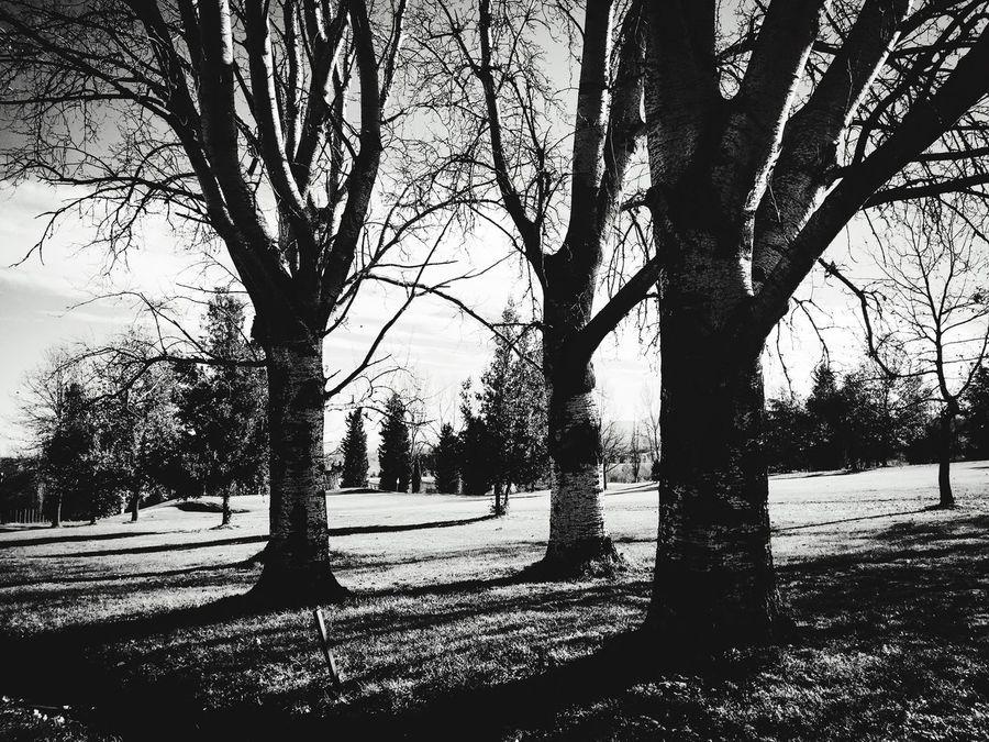Tree Tree Trunk Outdoors Nature Tranquility Day Blackandwhite EyeEm Best Shots - Nature EyeEm EyeEmArtists Beauty In Nature EyeEm Best Shots - Black + White Bologna, Italy Golf Club Montesanpietro
