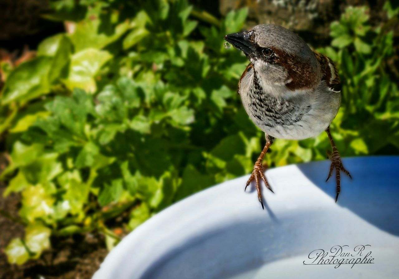 Vogel mit Durst First Eyeem Photo Nature Vogel Tier Tiere Animals Sony Sony7r