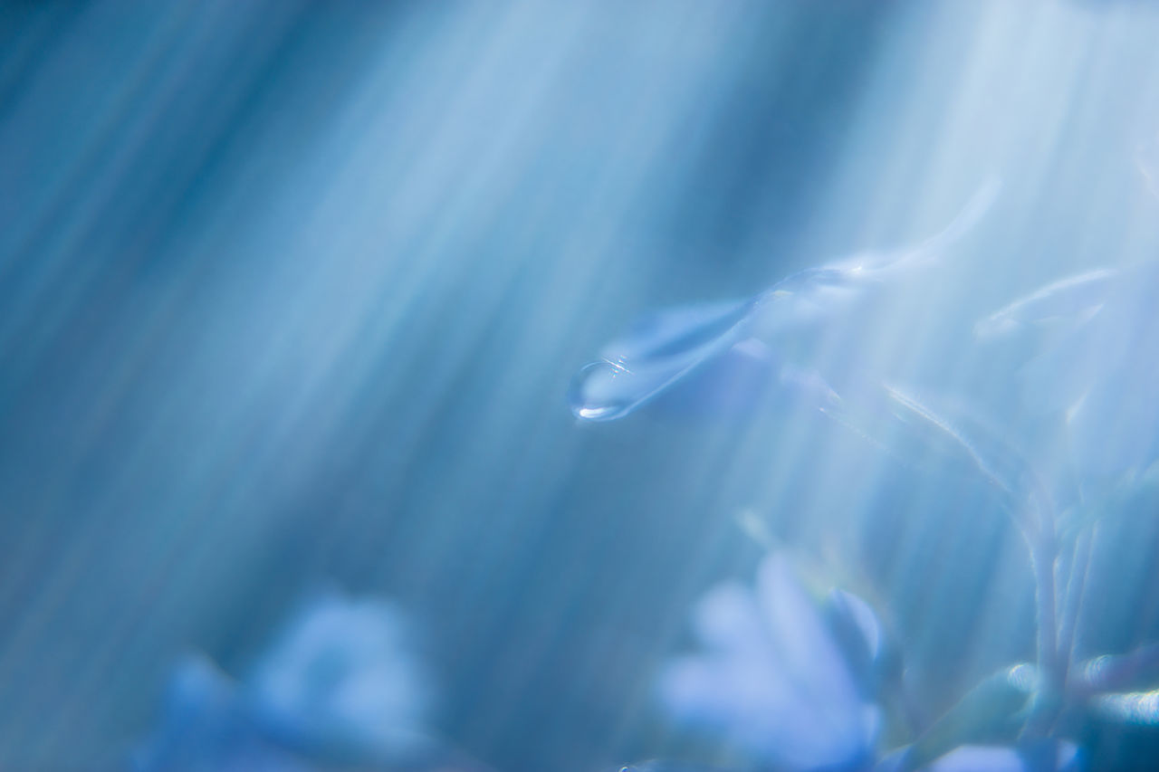 """""""One drop 20170109"""" Beauty In Nature Blue Bokeh Bokeh Photography Close-up Drop Flower Flowers Kenko Extension Tube 10mm+16mm Moss Phlox Nature No People Outdoors Shizuku Photo SONY A7ii Sony Sonnar T* FE 55mm F1.8 ZA Sony α♡Love Water Water Droplets"""