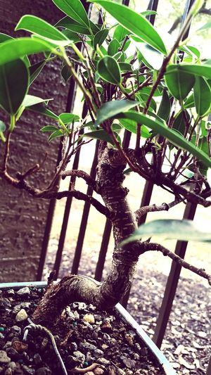 Bonsai tree. :-)
