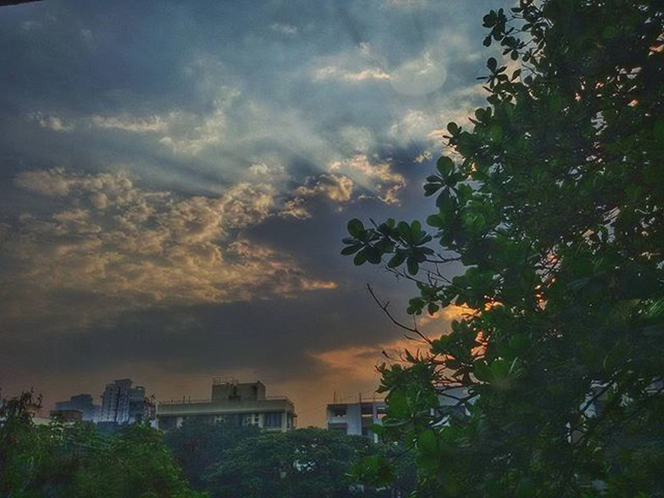 Morningnature Naturewalk  Naturelovers Nature Naturebueaty Sunrise Sunrise_sunsets_aroundworld Instapic Pics Photo Instagram Indianphotographersclub Indianphotographer Firstlookindia Firstlook_india Indianinstagramers Instagramers PhonePhotography Mobilephotographers Mobilephotography Photographer Samsunggalaxygrand2 Mumbai Maharshtra India maharashtra_ig @phodus_competition @inspiroindia @mumbaibizarre @insta_maharashtra mumbainature ngma mycolourofjoy