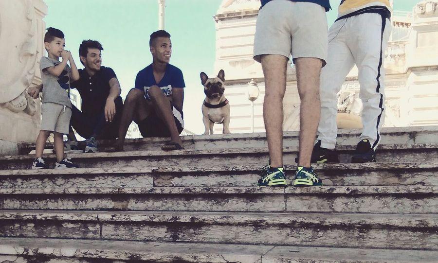 Taking Photos People Enjoying Life Cute Pets Frenchbulldog Summer Dogs