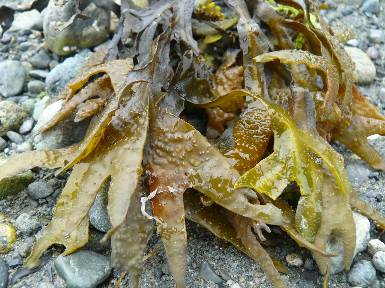 Nature Photography Nature's Diversities The Essence Of Summer Seaweed Parksville Bc Colour Of Life