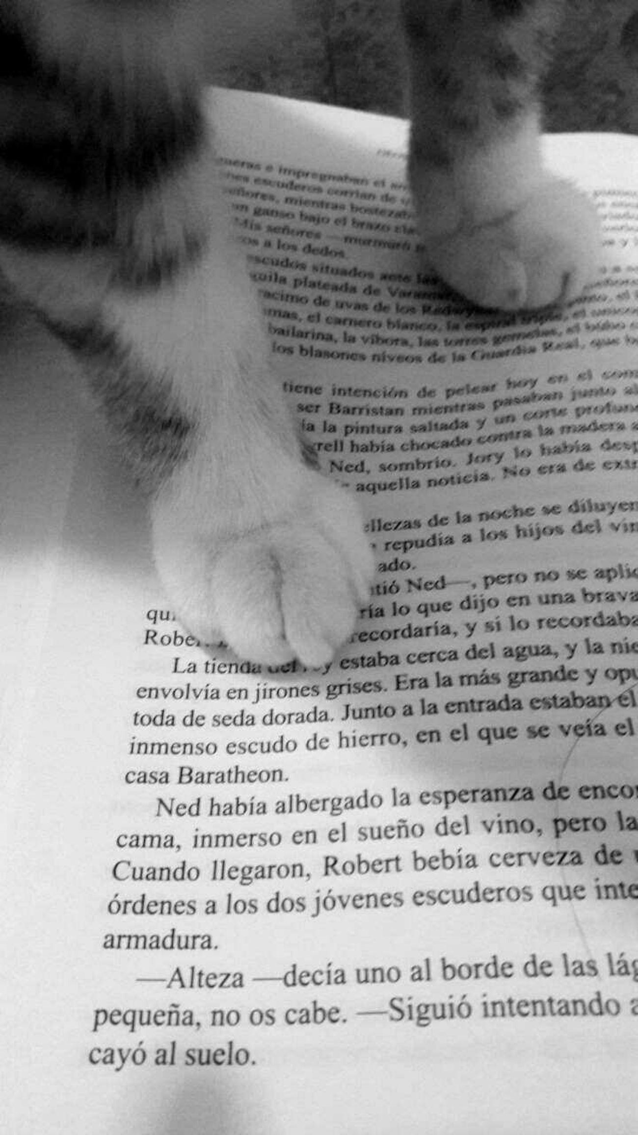 ❤ Cat Kitty Kitty Cat Gato Gatito Gata Gatita  Book Libro Words Pet Balck And White Blanco Y Negro Blanco Black White Legs Words