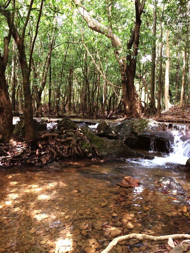 ธรรมชาติ Relaxing สงบ ฟังเสียงหัวใจตัวเอง