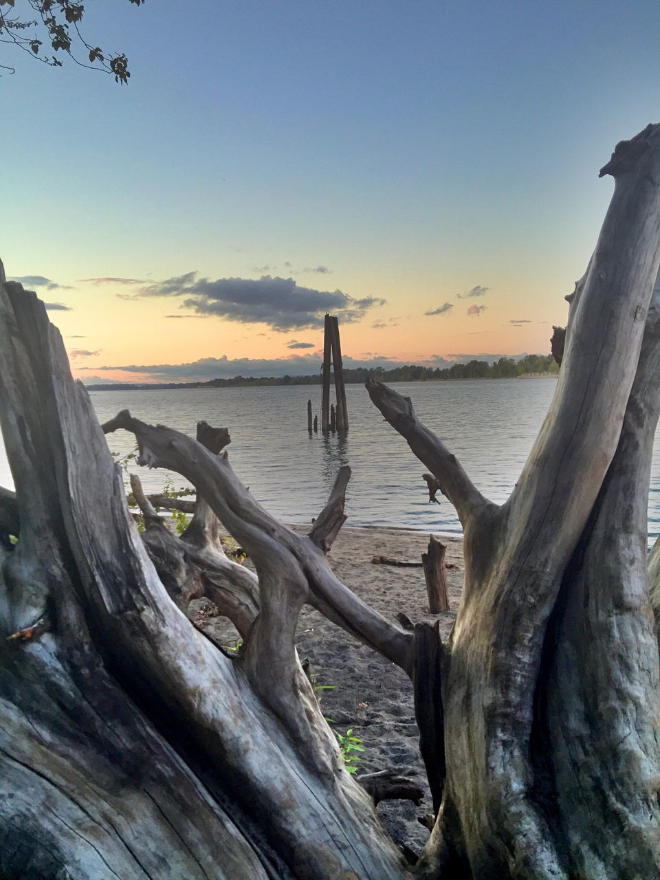 tree trunk, wood - material, sunset, nature, tree, sky, no people, outdoors, beauty in nature, water, scenics, tranquility, sea, dead tree, horizon over water, day, close-up