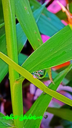 Check This Out Plant and Water Photo♡