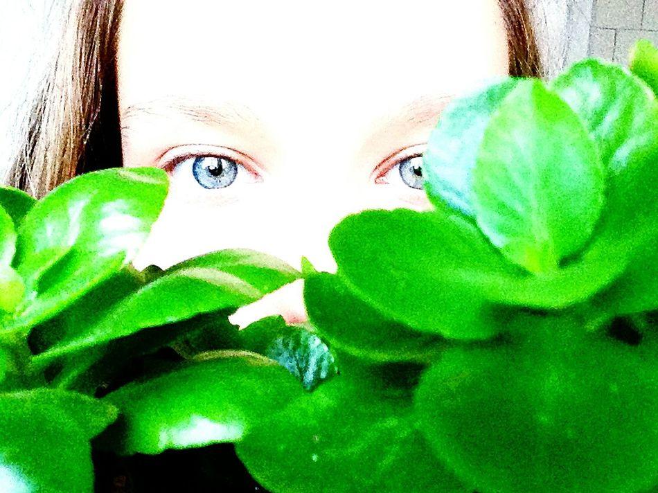Eyes голубыеглаза цветок  природа🍃 EyeEm Nature Lover Sweet Home♡ очень красиво Love♥ волшебно🎇 милота😊 Hello World Необычноефото💁🏽 лето2016 Hi! отдых Eyeemphotography Eyeem Photography EyeEm Gallery Magical Moments Happy :) EyeEm красота💕🌸🌹 Relaxing Beautiful ♥ Enjoying Life