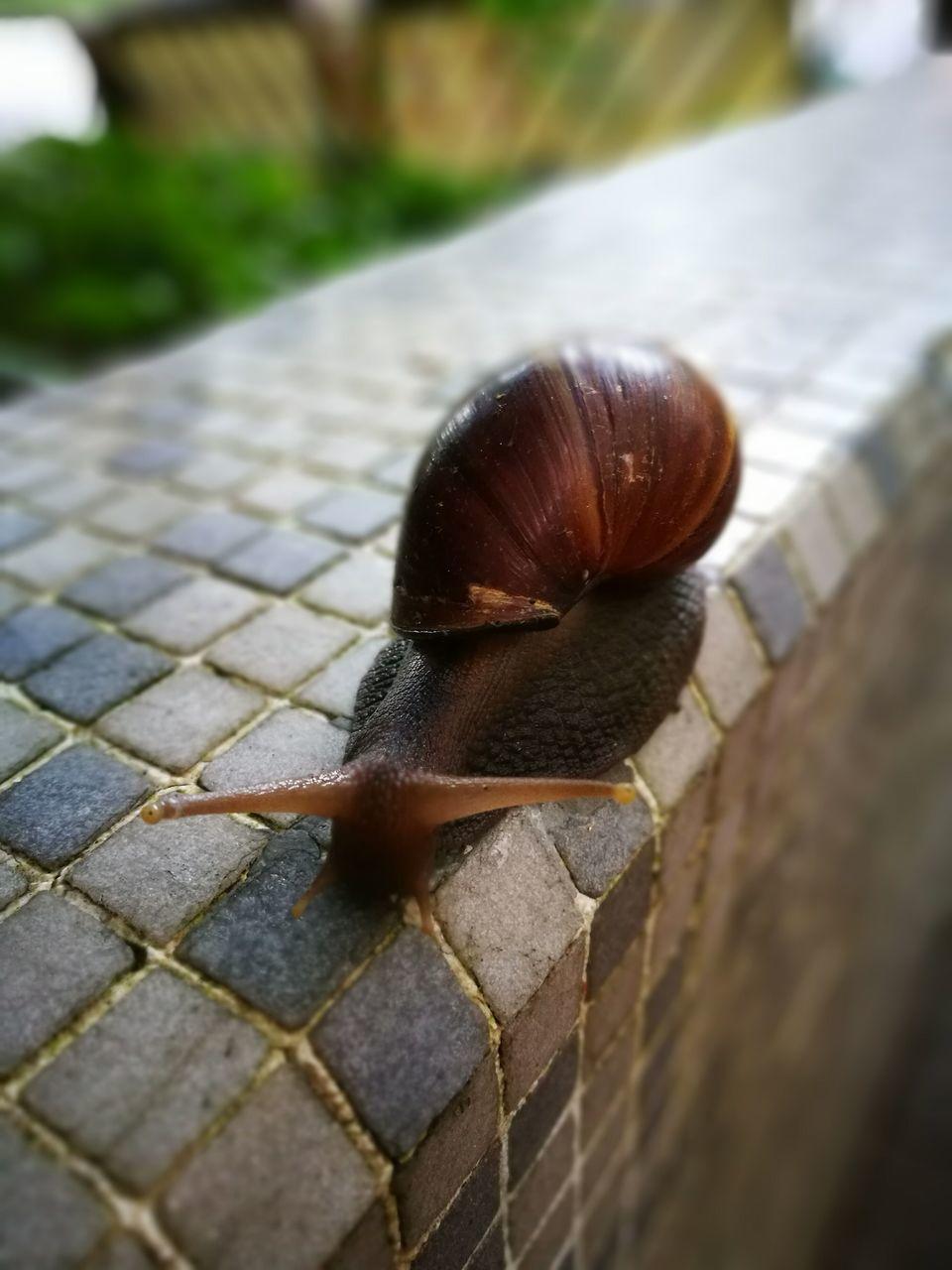 snail, one animal, animal themes, gastropod, wildlife, animals in the wild, close-up, day, no people, outdoors, slug, nature, animal wildlife, fragility