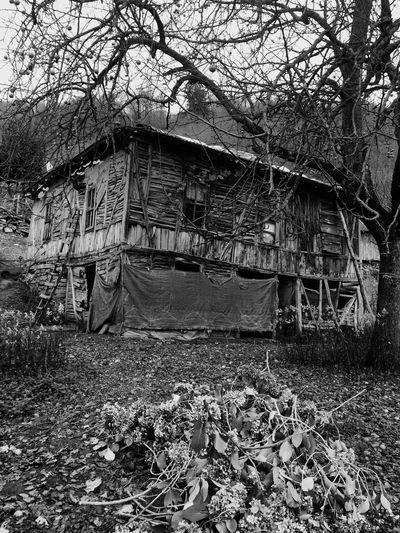 Oldhouse Naturelovers Hello World
