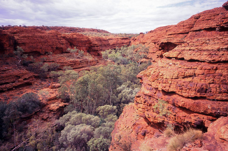 looking into kings canyon Australia Australian Eroded Geology Kings Canyon Landscape Northern Territory Nt Red Red Centre Rock Rock Rock Formation Rock Formations Semi Dessert Stone Textured