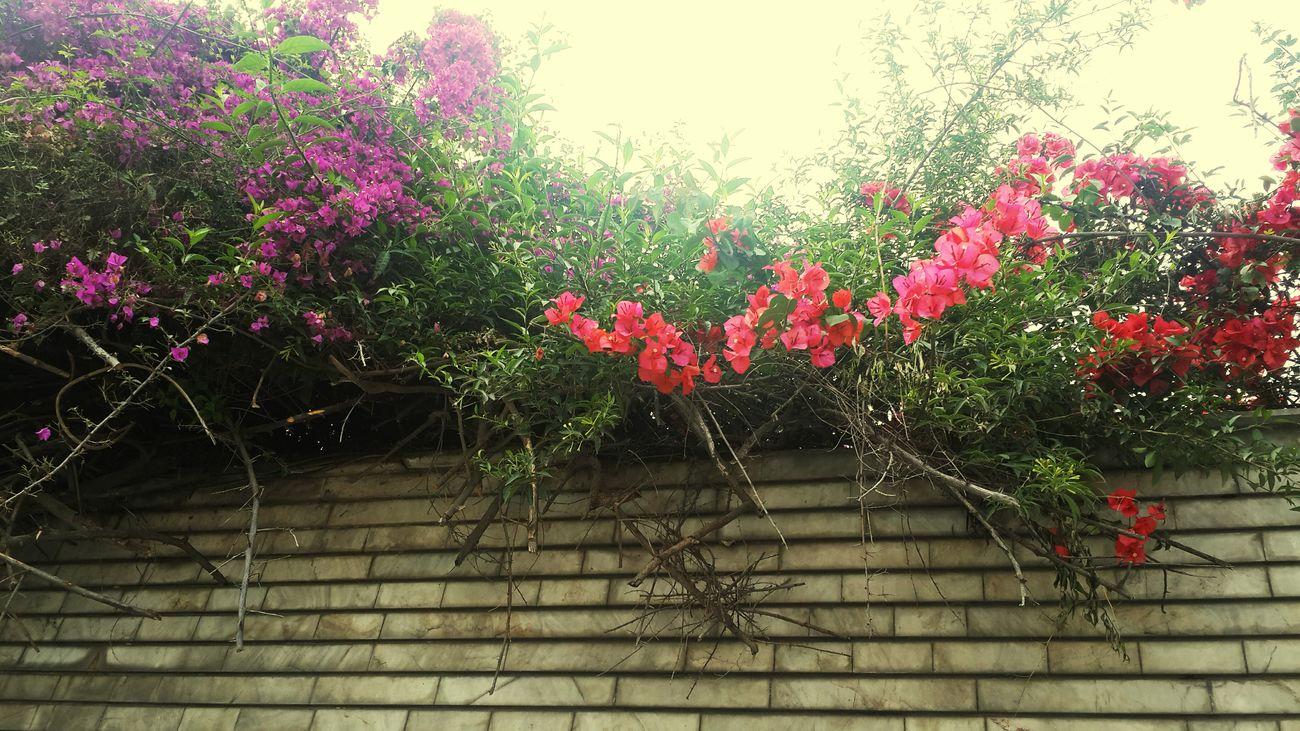 💙🌹 Green Enjoying Life Photography EyeEm Best Shots Popular Colorful EyeEm Gallery Samsungphotography Spring2015 Nastaran EyeEm Pink Popular Photos Flower Streetphotography Purple Flower