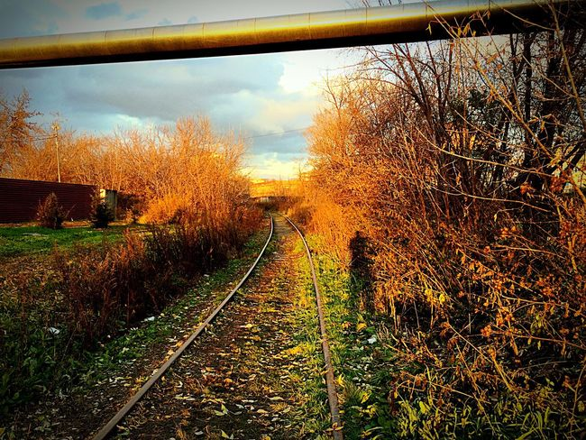 Autumn 🍂 No People Day Nature Nature Yellow 🍁 🍂 🍁 🍂 🍃