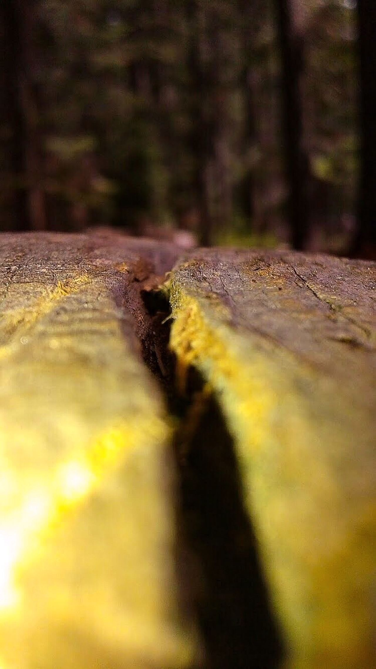 Focus On Foreground Wooden Log Trees Yosemite National Park Landscape_photography Dead Tree EyeEm Nature Lover