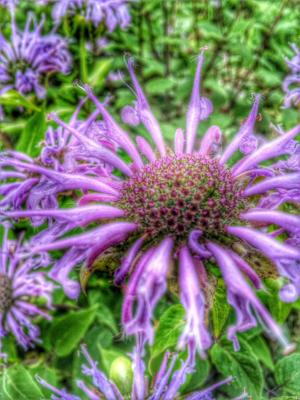 flower, purple, beauty in nature, fragility, growth, freshness, outdoors, no people, petal, nature, plant, day, flower head, blooming, close-up, eastern purple coneflower