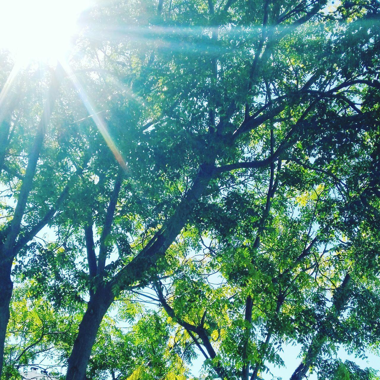 Lightsun Sunshine Sun Tree Nature Relaxing Light