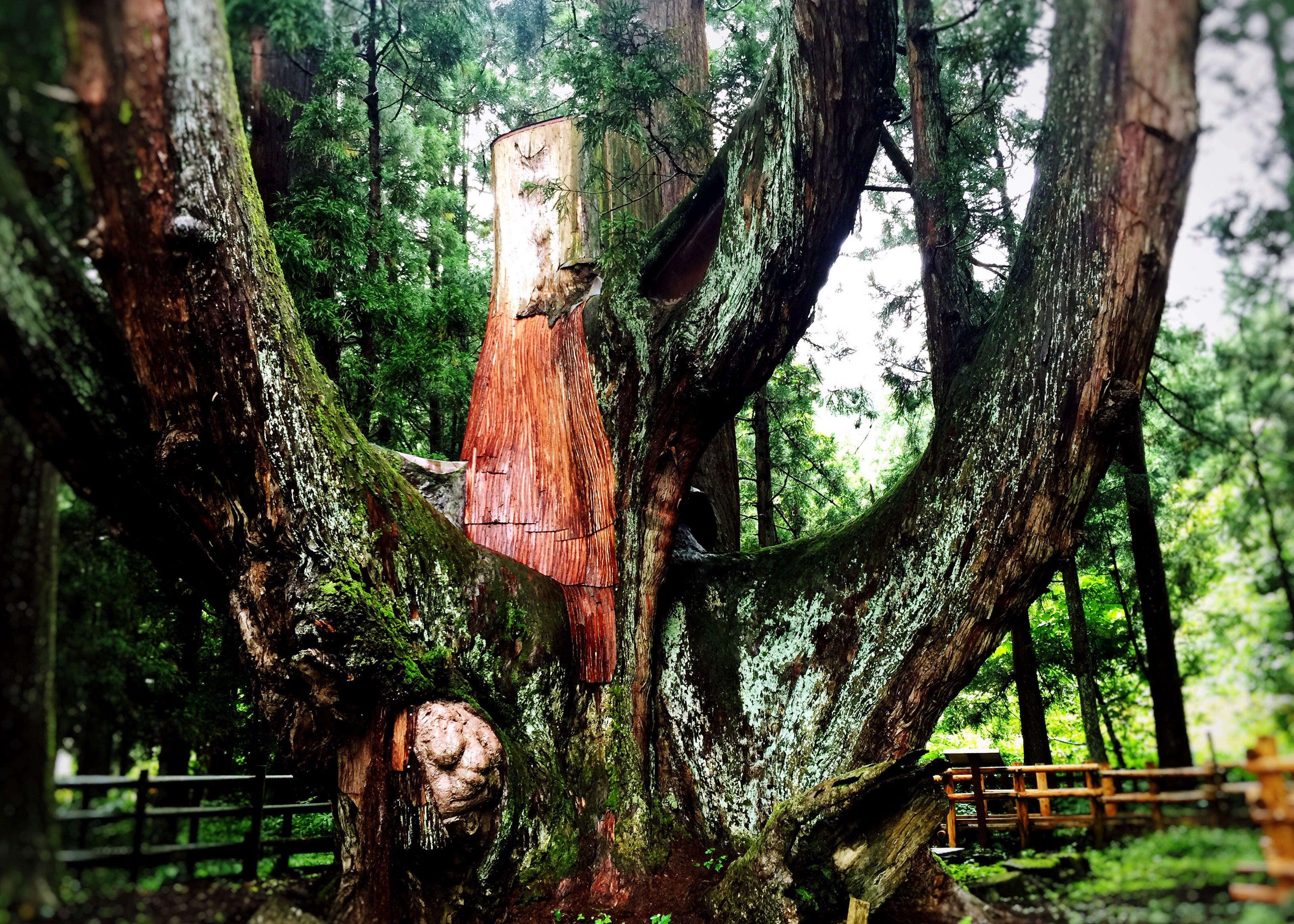 tree, tree trunk, forest, growth, wood - material, branch, close-up, day, focus on foreground, old, nature, outdoors, art and craft, art, no people, creativity, tranquility, human representation, weathered, cemetery